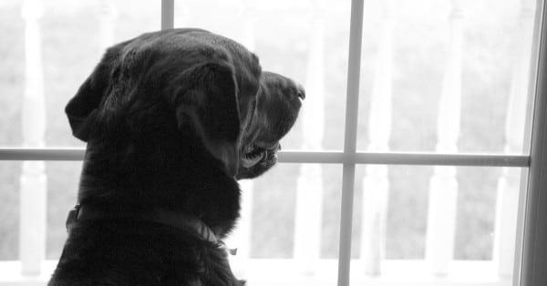 dog missing owner